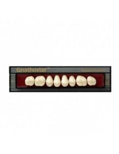 Бічні зуби Gnathostar, Ivoclar Vivadent
