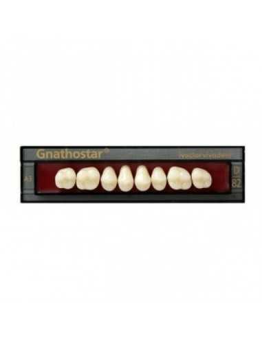Боковые зубы Gnathostar