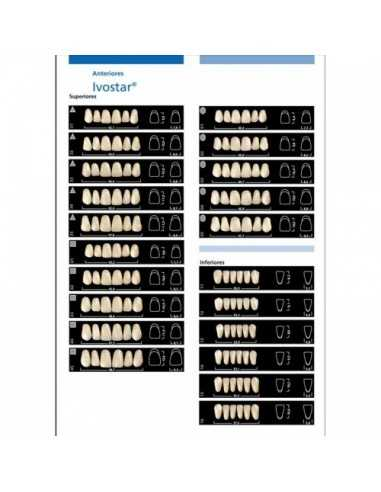 Фронтальные зубы Ivostar
